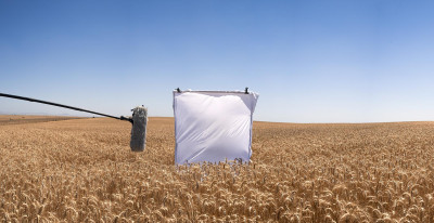 Untitled XVII - Wheat