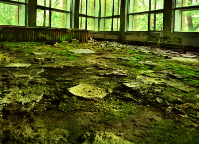 Once was Forest (Chernobyl)