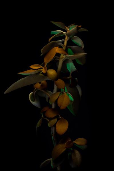 Green & Gold (Kaapse Fynbos Series)