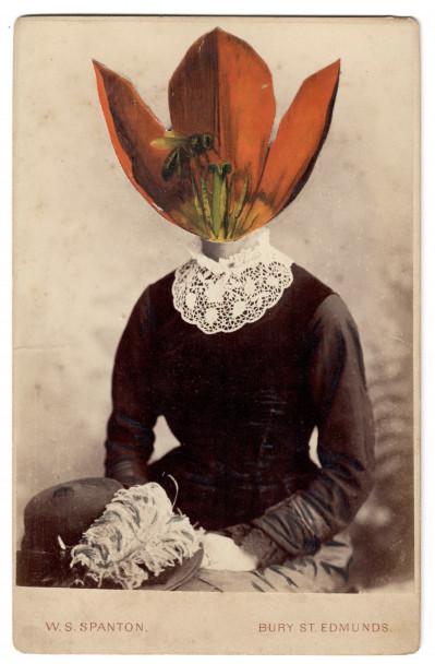 Tulip Schrenkii VI