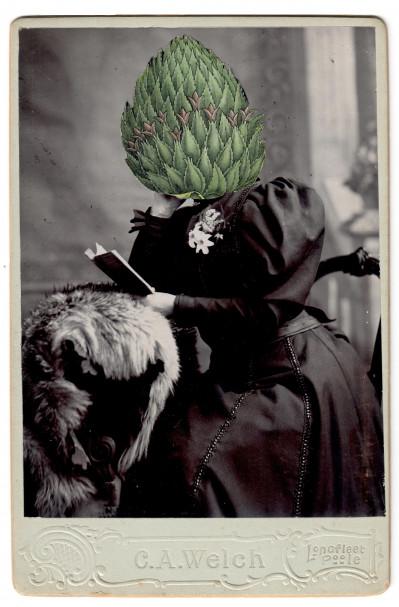 Bromelia ananas L.